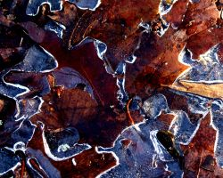 Leaves in Ice by Ohanzee