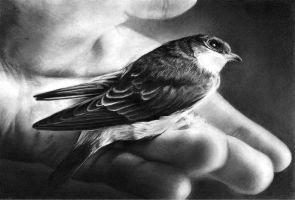 A Swallow In Hand by ken-chen