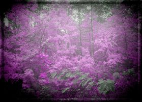 LILAC WOODS by live2b