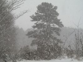 Tree in a snowstorm... by Zs99