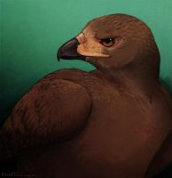 Red-Tailed Hawk by Artisticaviary