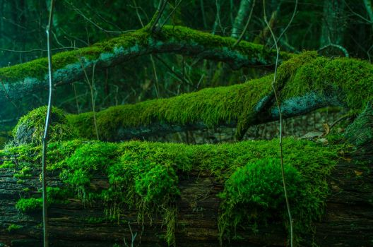 Moss by agris58