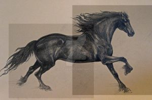 Friesian by Lilithka