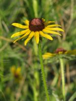 00168 - Prickly Yellow Flower by emstock