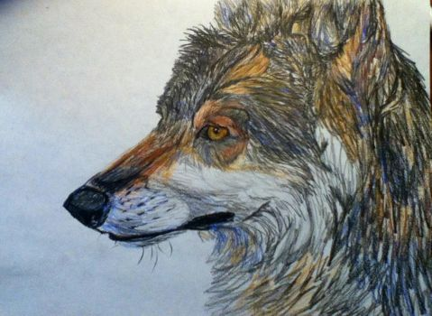 Wolf Pencil Sketch by Icoria