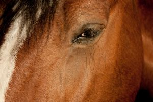 Close up of a horse's eye by designerfied