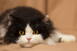 Hypnotic fluffball by hoschie