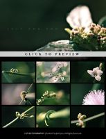 Flower II: Just For You by reubenteo