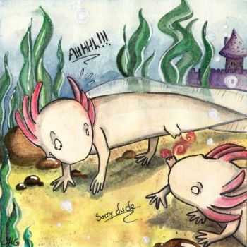 Axolotl...Sorry dude... by Yommytheonly