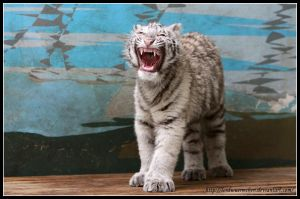Sweet yawn by AF--Photography