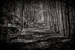 Path to enlightenment by Linlith
