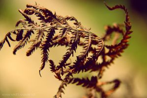 fern2 by Nina-Art