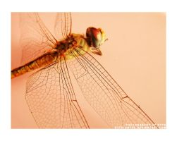 beauty 2 by chaltham