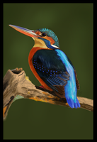 King Fisher by ArtofJefferyHebert