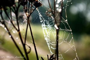 Morning's dof by Toothrot