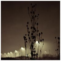 fog and dark and lamps by D-u-D