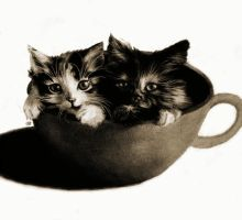 Kittens in a cup by gaykittens