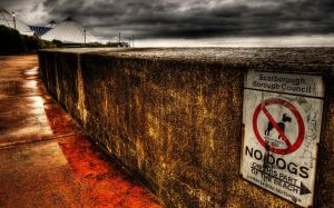 No Dogs by taffmeister