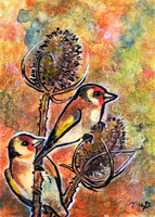 aceo goldfinches by kailavmp