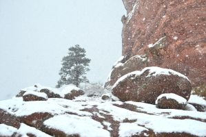 Shiprock Pine In The Snow by mttomimages