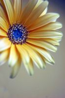 Yellow Flower 6107454 by StockProject1