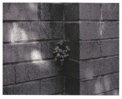 Plant alone in the wall by EsperAqua