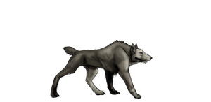 Colorless Wolf by DemonsHeir