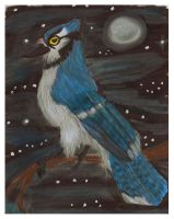 Blue-Jay of the Night by CrystalMarineGallery
