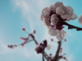 Flower in Apricot Tree by LaVitaaa
