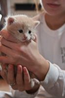 Holding Kitten by chase009