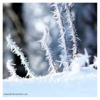 Sticks and frost by Natasek