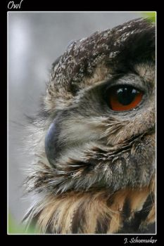 owl by Jna1985