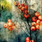 Berries02 by horstdesign