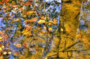 Reflections of Fall by Elva-Luthien