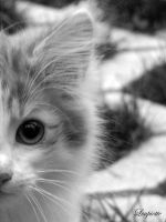 Kitten 3 by Loupiotte1203