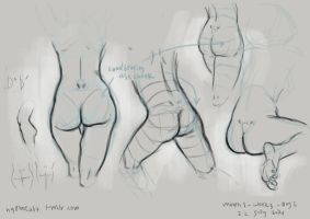 anatomy study 2 by gastrovascular