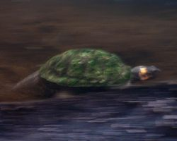 worlds fastest turtle by skilly007