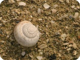 Sea shell... by an-neo