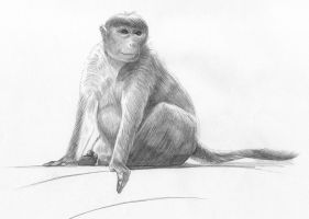 Monkey by findmattlee