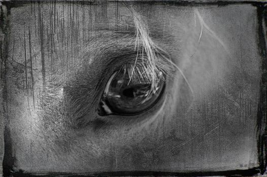 Into the Equine Soul by bullitt2341