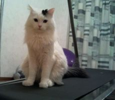 My cat :D by AkinaSilver