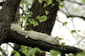 Albino Squirrel by ph0t0k1tty