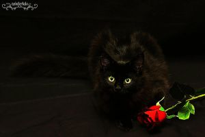 the black cat by Wintertale-eu