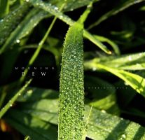 Morning Dew. by hybridgothica