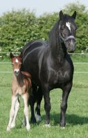 Mare and Foal 6 by equinestudios