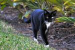 Felix on a mission by NB-PhotoArt