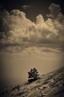 Silence Of Nature 033 by Andreev-PLAC