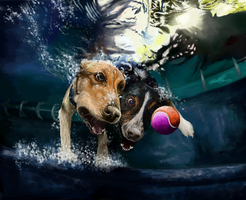 Diving Dogs by TinTans