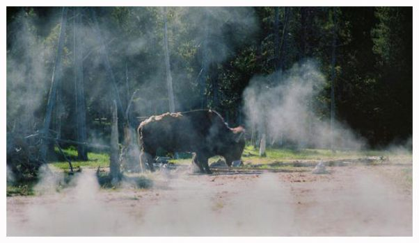 Buffalo in the mist by Captain-Planet