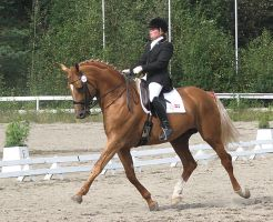 dressage 006 by Legaat-stock